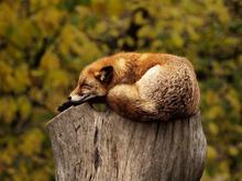 Начните воспринимать сон и время подготовки к нему как личное время. Как начать высыпаться