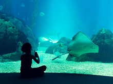 Власти одобрили возведение океанариума на Гребном канале