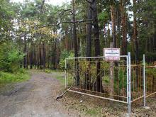 Новый опрос: больше 50% жителей Челябинска за строительство больницы в городском бору