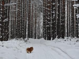 4,5 миллиона выделят на создание лесного парка в Новосибирске