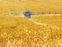 Около 600 миллионов компенсации получили аграрии Новосибирской области