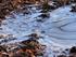 Зимние морозы снова вернутся в Новосибирск