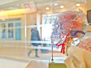 Челябинские ученые сделали открытие в работе мозга: интеллект можно определить по ЭЭГ