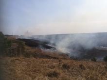 Площадь пожара — более 15 га. В Нижегородской области второй день горят «Артемовские луга»