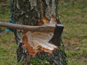 Найдут тех, кто валит деревья в «Парковом»: мэрия Челябинска обратилась в прокуратуру