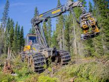 В России впервые вышла на биржу лесопромышленная компания. Она привлекла 30 млрд руб.