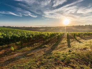Откуда виноград? Где обустроили винодельни российские миллиардеры