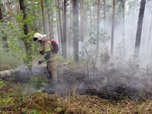 «Ущерб более 118 млн руб.». Из-за пожаров свердловчанам запретят ходить в лес