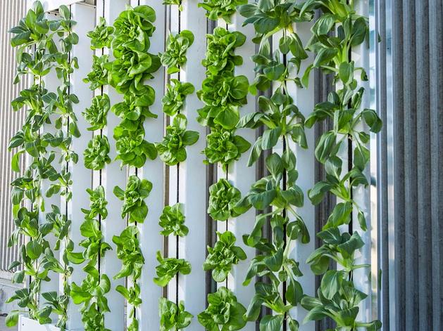Питерцы будут выращивать зелень при поддержке «Ураласбеста»