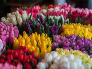 Букет на дом за два часа: «Яндекс» начнет экспресс-доставку цветов по Челябинску