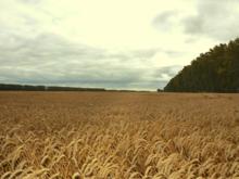 Новый владелец агрохолдинга «Сибиряк» собирается повысить его урожайность в несколько раз