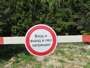 Теперь официально. Свердловский губернатор подписал указ о запрете посещения лесов