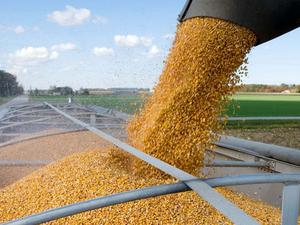 Красноярский край нарастил экспорт зерновых