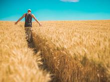 Более 70 тысяч фермеров присоединились к маркетплейсу РСХБ