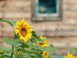 Тотальная ликвидация. Нижегородские власти упразднят две трети садовых товариществ