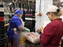 Андрей Косилов закрывает свою птицефабрику в Свердловской области