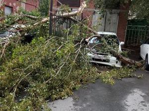 Шторм в Екатеринбурге повалил деревья. Пострадали автомобили