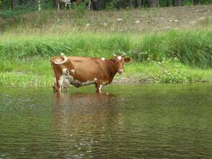 Свердловские фермеры просят власти объявить режим ЧС