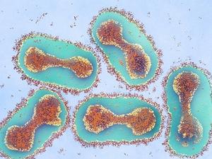 Запрещенный в РФ препарат для концентрации «риталин» и эволюция вирусов. Мир науки