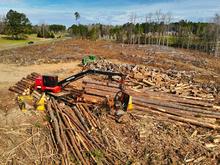 Глава лесодобывающей компании предложил приватизировать 2-3% леса. В Минприроды против