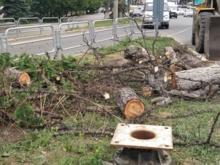 Ответственным за снос даурской лиственницы сотрудники «Геоцентра» указали Максима Куляшова