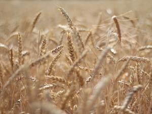 Первую в мире сельхоз-википедию для фермеров создаст Россельхозбанк