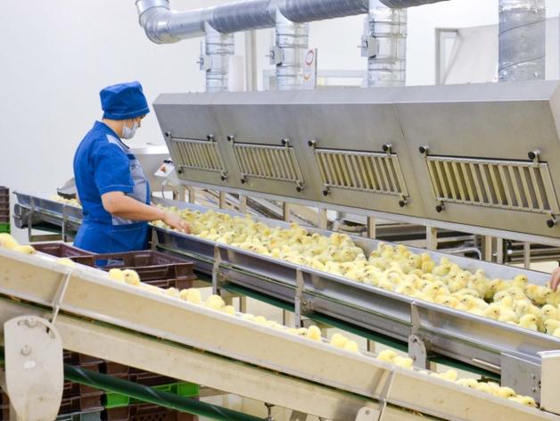 Власти продают Рефтинскую птицефабрику. Имена инвесторов не разглашаются