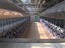 Новый молочный комплекс на 1328 голов построен в Ардатовском районе