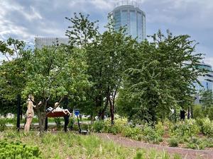 Благодаря поддержке Сбербанка на набережной в центре Екатеринбурга появился «Сад трав»