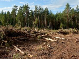 Вырубка деревьев под строительство спорткомплекса в Челябинске обернулась уголовным делом