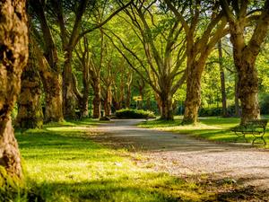Новосибирцы оценили благоустройство парков в городе на 3,4 балла из 5
