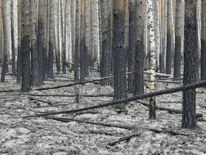 Лесные пожары в Тюменской области тушат на деньги из резервного фонда