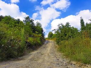 Губернатор договорился с «Транснефтью» о строительстве дороги Гари — Таборы