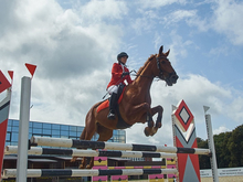 Чемпионат и первенство Нижегородской области по конкуру состоятся 11 и 12 сентября