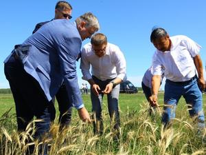 Агробизнес Челябинской области получит еще 500 млн на восстановление после засухи