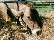 Сбер грозит банкротством одному из крупнейших производителей мясопродуктов в регионе
