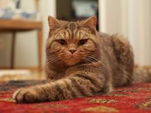 Исследование Сбербанка: россияне стали тратить больше на уход за домашними животными