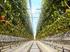 Агрокомплекс «Чурилово» собирается купить крупная федеральная компания