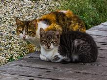Челябинские приюты для животных смогут компенсировать затраты из бюджета