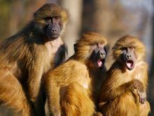 Как распознать продуктивный спор: радуга эмоций и существенное усложнение вопроса