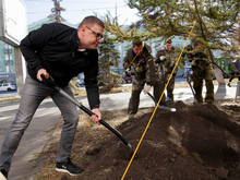 Алексей Текслер посадил даурские лиственницы на проспекте Ленина в Челябинске
