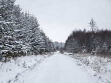 Челябинское УФАС остановило торги на постройку дороги под зиму
