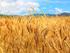«Ариант» вложил 6 млрд рублей в пострадавшее от засухи сельское хозяйство Южного Урала