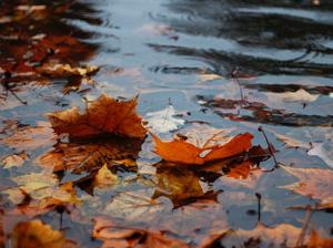 Дождь и ветер: погода в Новосибирске начнет портиться на выходных