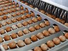 Свердловским супермаркетам придется очистить полки от курицы и яиц