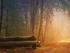 Хабаровские компании заплатят 1 млн руб. штрафа с нелегальной торговли лесом на 3,2 млрд